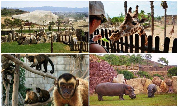 Зоопарк Мурсии