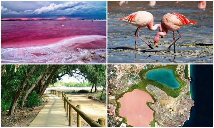 Природный парк Лагуны Ла Мата и Торревьеха