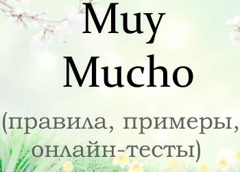 Разница между Muy и Mucho: правила + тесты на проверку