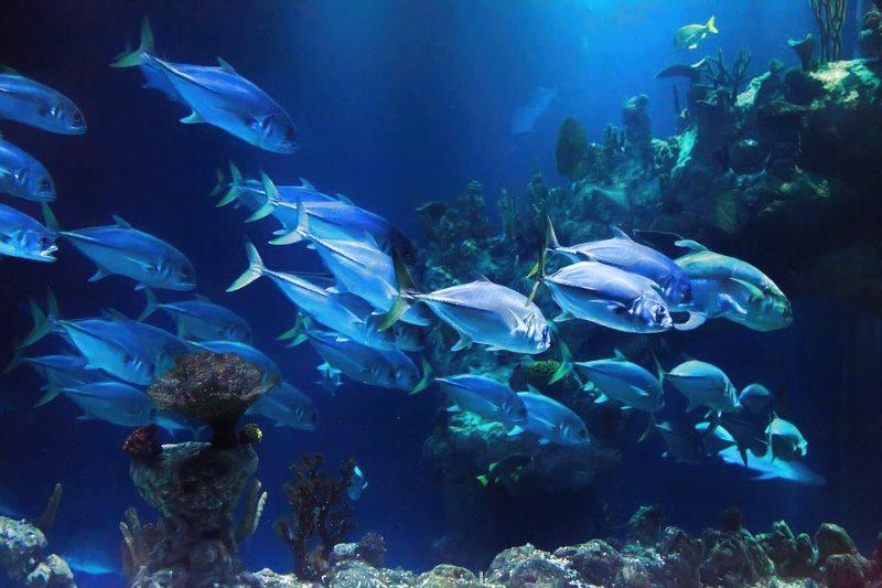 Океанариум в Севилье