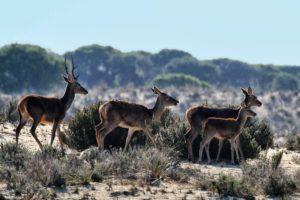 Национальный парк Донанья