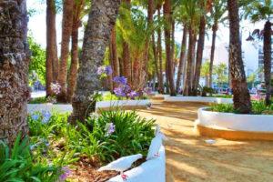 Парк Эльче — пальмовая столица Бенидорма