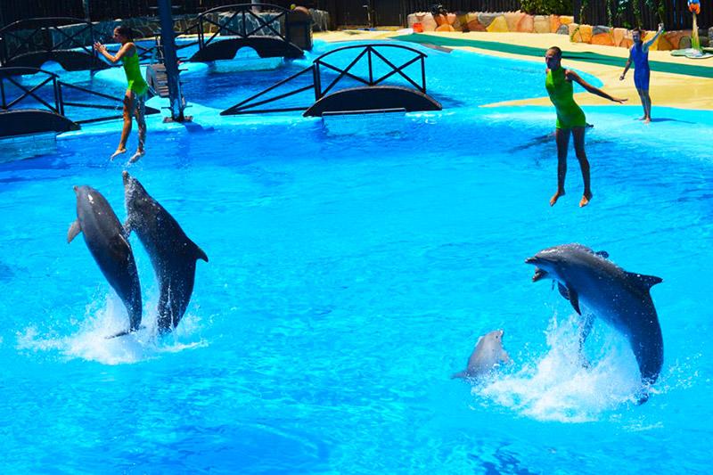 Парк морских животных и птиц «Мундомар»