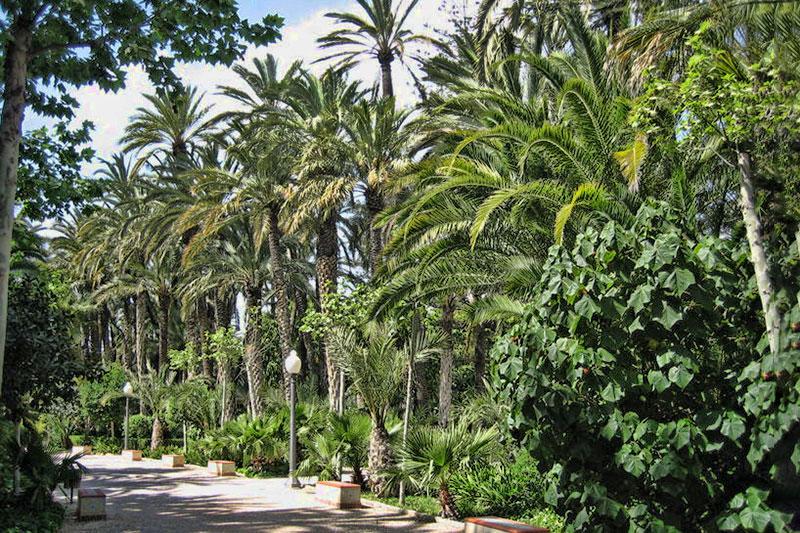Пальмовые рощи (Пальмераль)