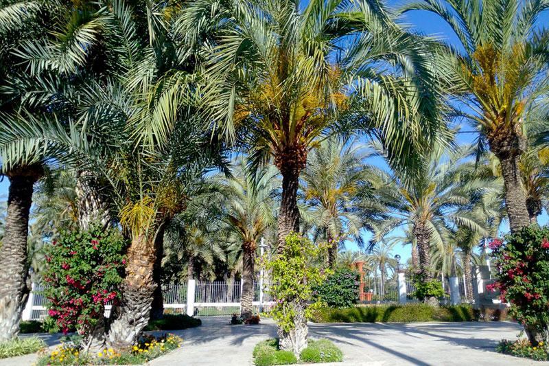 Ботанический сад Эльче