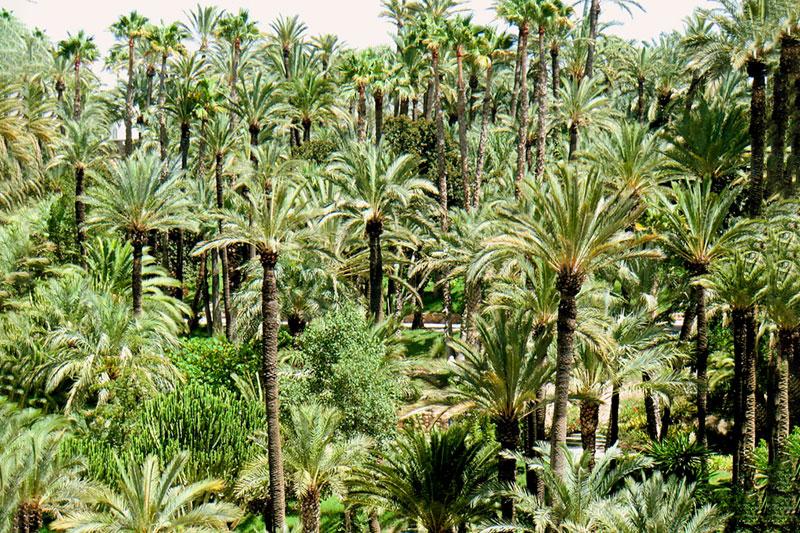 Пальмовые рощи Эльче